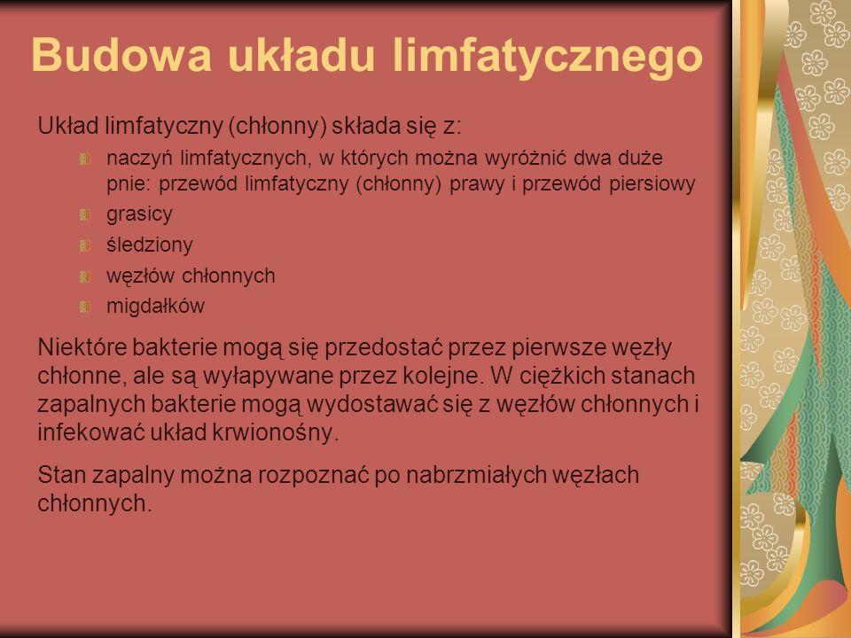 Budowa układu limfatycznego Układ limfatyczny (chłonny) składa się z: naczyń limfatycznych, w których można wyróżnić dwa duże pnie: przewód limfatyczn