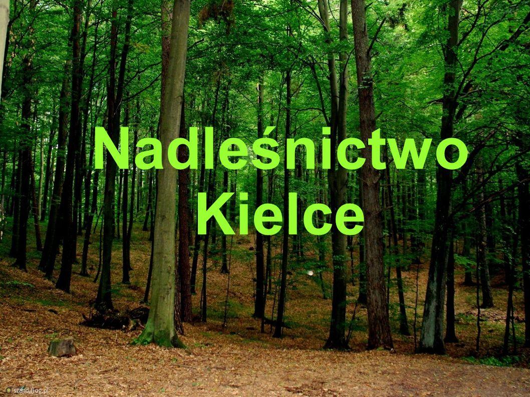 Rys historyczny Nadleśnictwo Kielce w obecnych granicach działa od 2007 roku.
