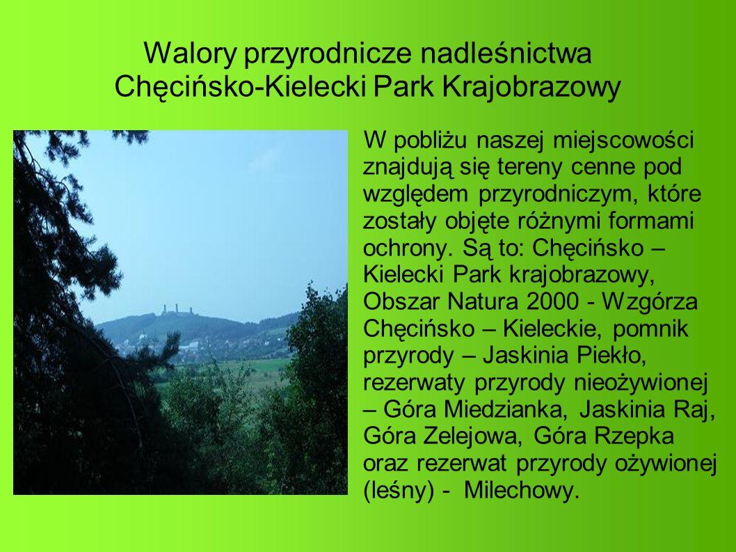 Walory przyrodnicze nadleśnictwa Chęcińsko-Kielecki Park Krajobrazowy W pobliżu naszej miejscowości znajdują się tereny cenne pod względem przyrodniczym, które zostały objęte różnymi formami ochrony.