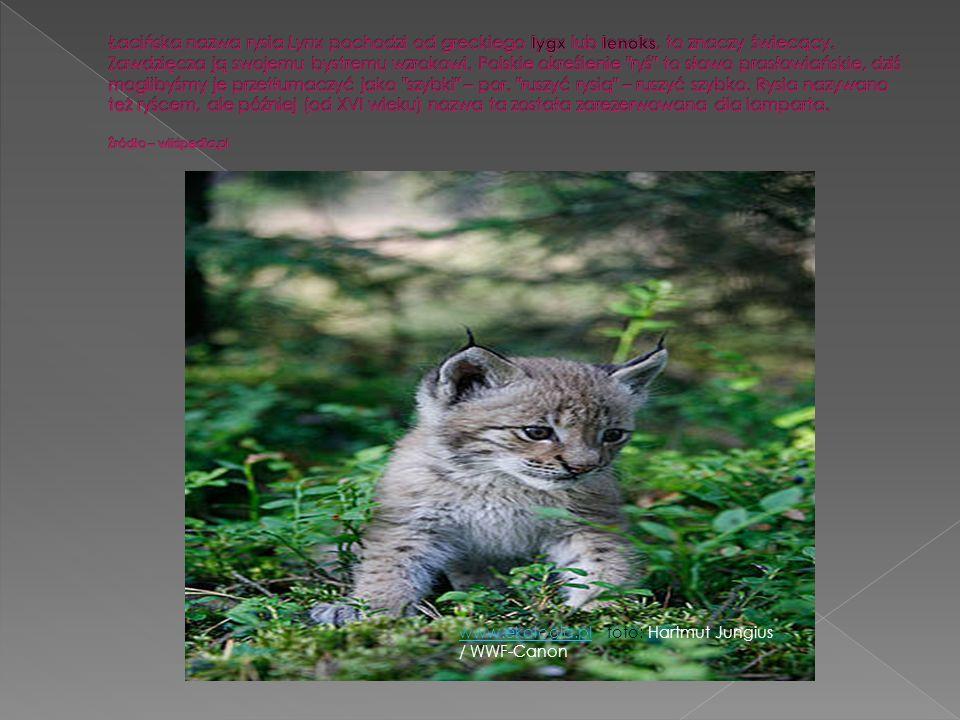 Grafika://www.ekologia.pl Fot. Bernard Landgraf, CC/Wikipedia