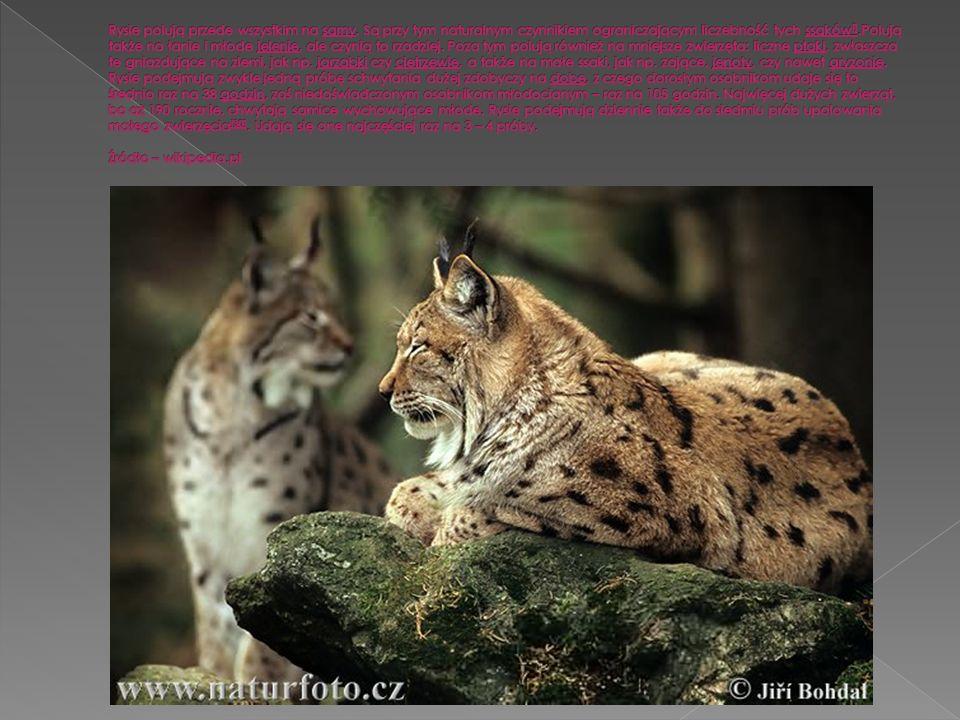 www.ekologia.plwww.ekologia.pl foto: Hartmut Jungius / WWF-Canon
