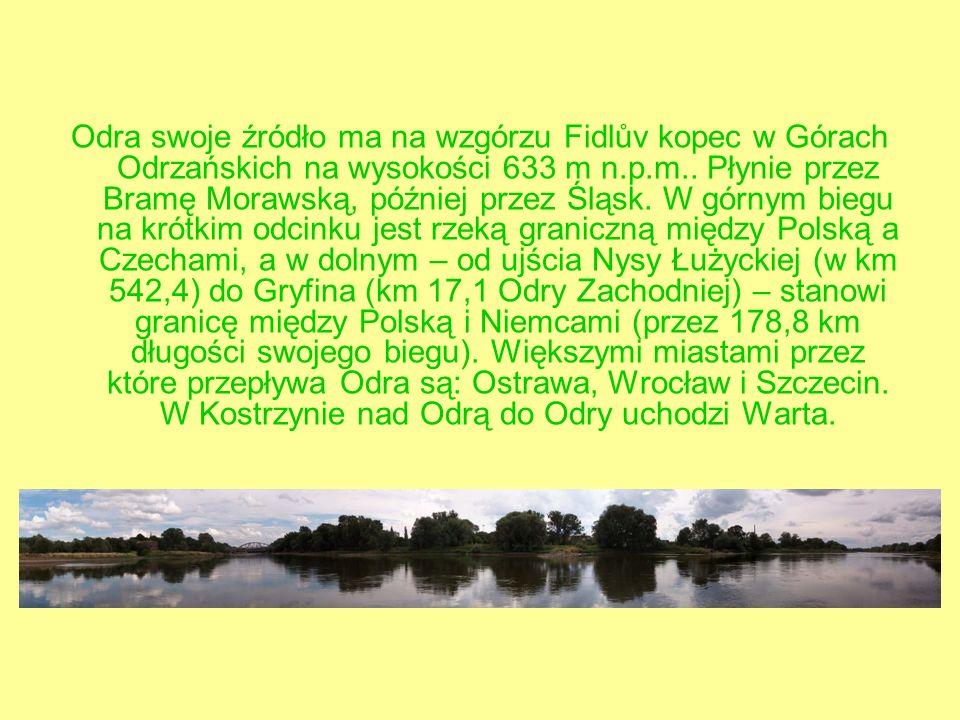 Odra swoje źródło ma na wzgórzu Fidlův kopec w Górach Odrzańskich na wysokości 633 m n.p.m..