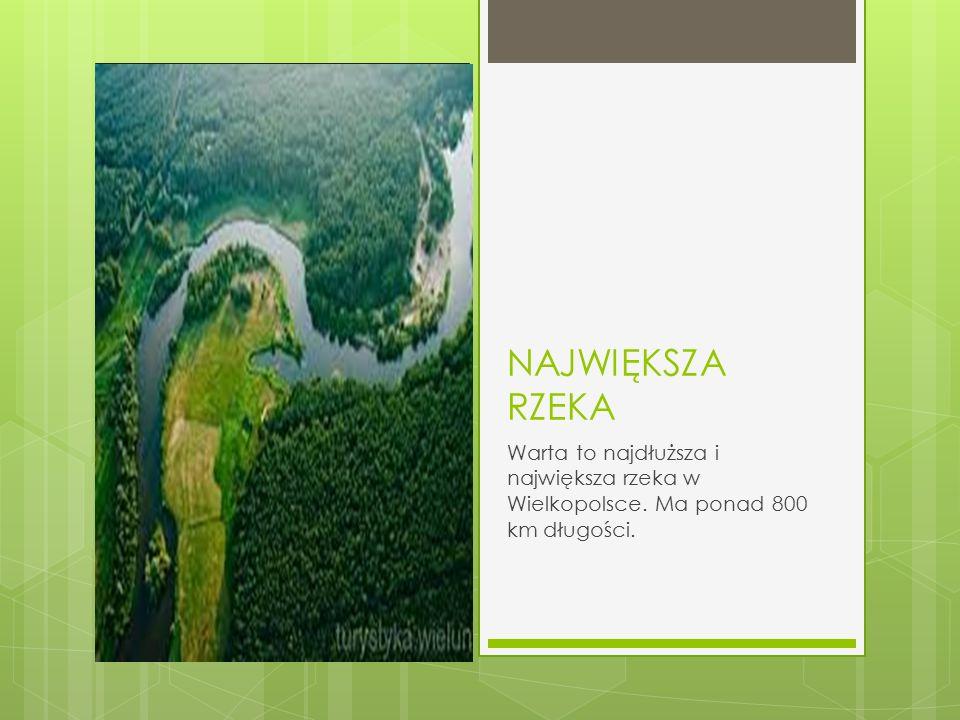NAJWIĘKSZA RZEKA Warta to najdłuższa i największa rzeka w Wielkopolsce. Ma ponad 800 km długości.