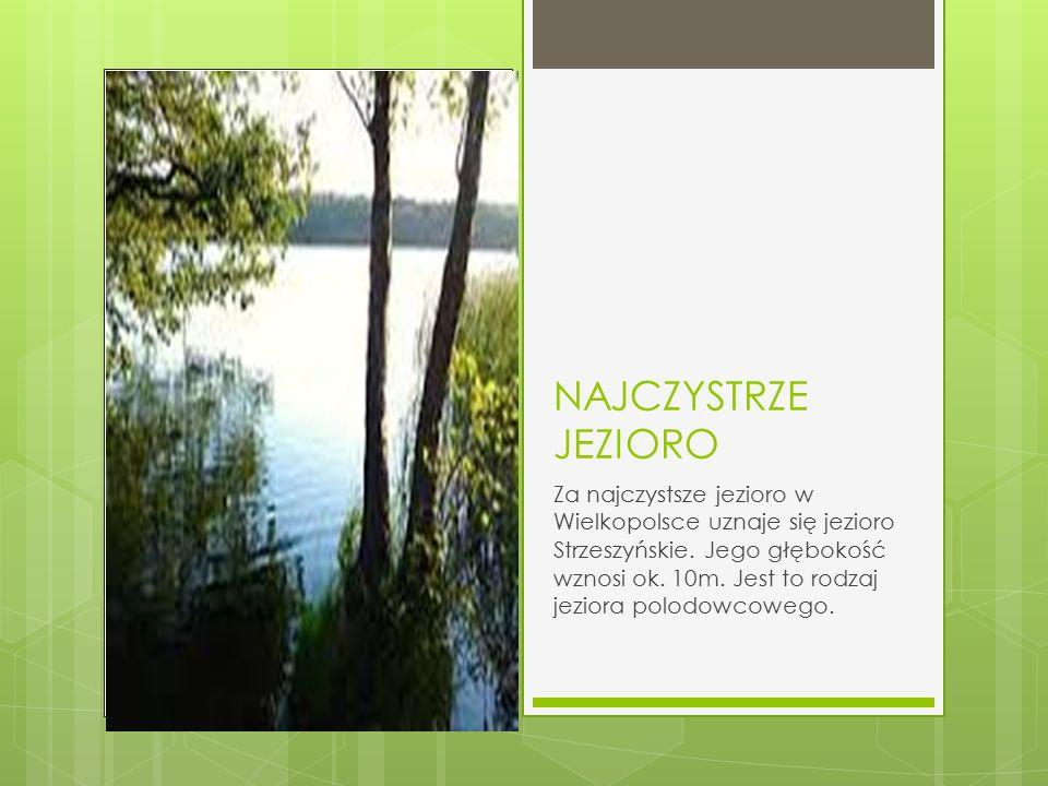 NAJCZYSTRZE JEZIORO Za najczystsze jezioro w Wielkopolsce uznaje się jezioro Strzeszyńskie. Jego głębokość wznosi ok. 10m. Jest to rodzaj jeziora polo