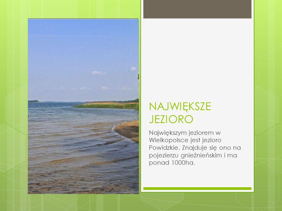NAJWIĘKSZE JEZIORO Największym jeziorem w Wielkopolsce jest jezioro Powidzkie. Znajduje się ono na pojezierzu gnieźnieńskim i ma ponad 1000ha.