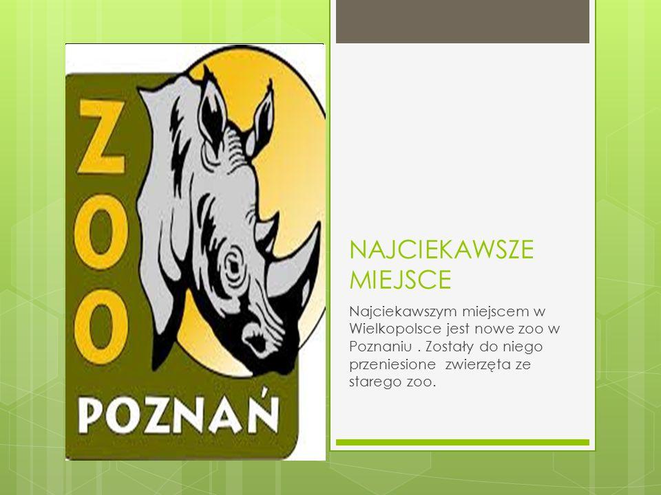 NAJCIEKAWSZE MIEJSCE Najciekawszym miejscem w Wielkopolsce jest nowe zoo w Poznaniu. Zostały do niego przeniesione zwierzęta ze starego zoo.