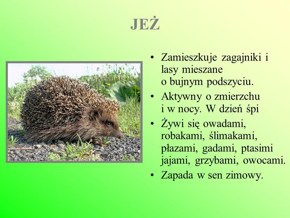 RYŚ Występuje w Karpatach i Puszczy Białowieskiej.