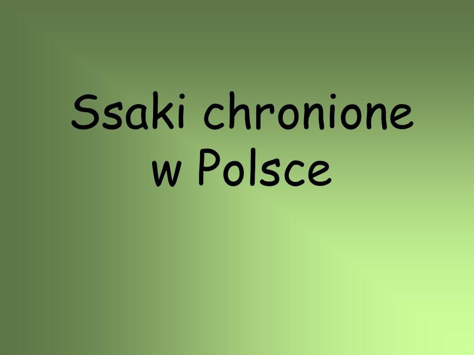 Nocek duży W Polsce występuje głównie w południowo-zachodniej części kraju.