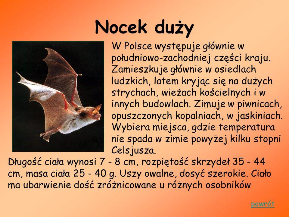 Nocek duży W Polsce występuje głównie w południowo-zachodniej części kraju. Zamieszkuje głównie w osiedlach ludzkich, latem kryjąc się na dużych stryc