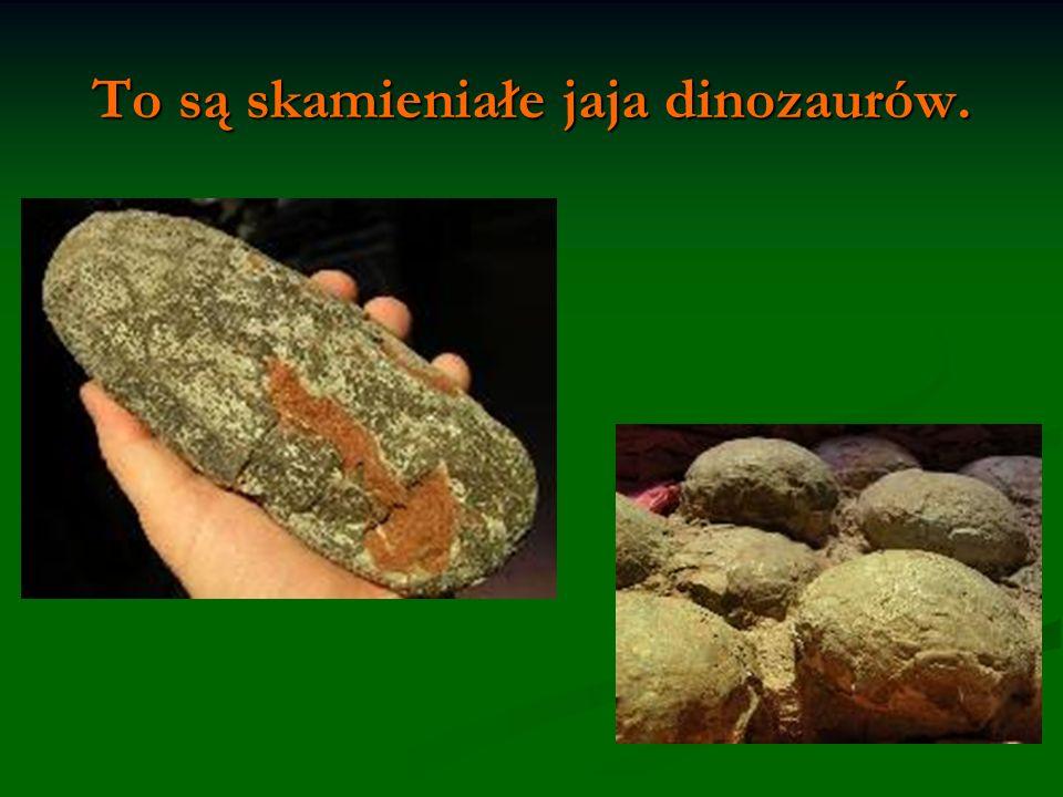 To są skamieniałe jaja dinozaurów.