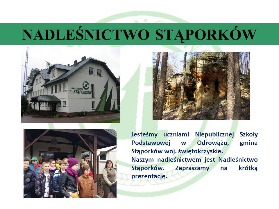 NADLEŚNICTWO STĄPORKÓW Jesteśmy uczniami Niepublicznej Szkoły Podstawowej w Odrowążu, gmina Stąporków woj.