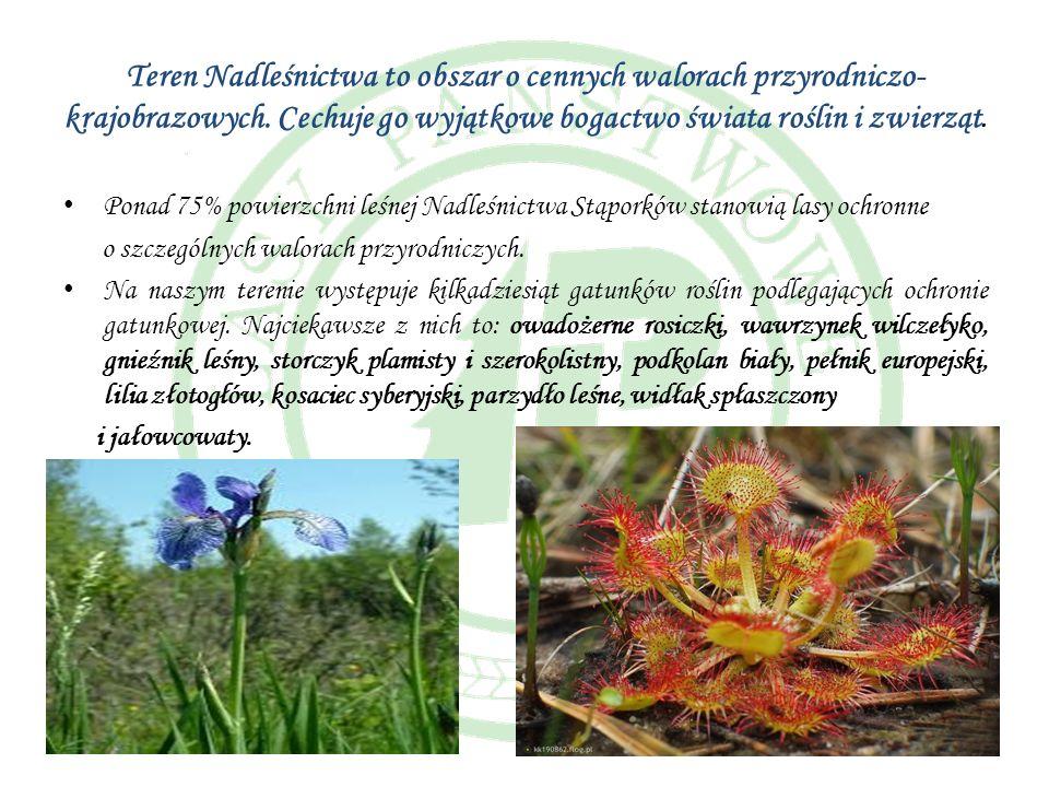 Teren Nadleśnictwa to obszar o cennych walorach przyrodniczo- krajobrazowych. Cechuje go wyjątkowe bogactwo świata roślin i zwierząt. Ponad 75% powier