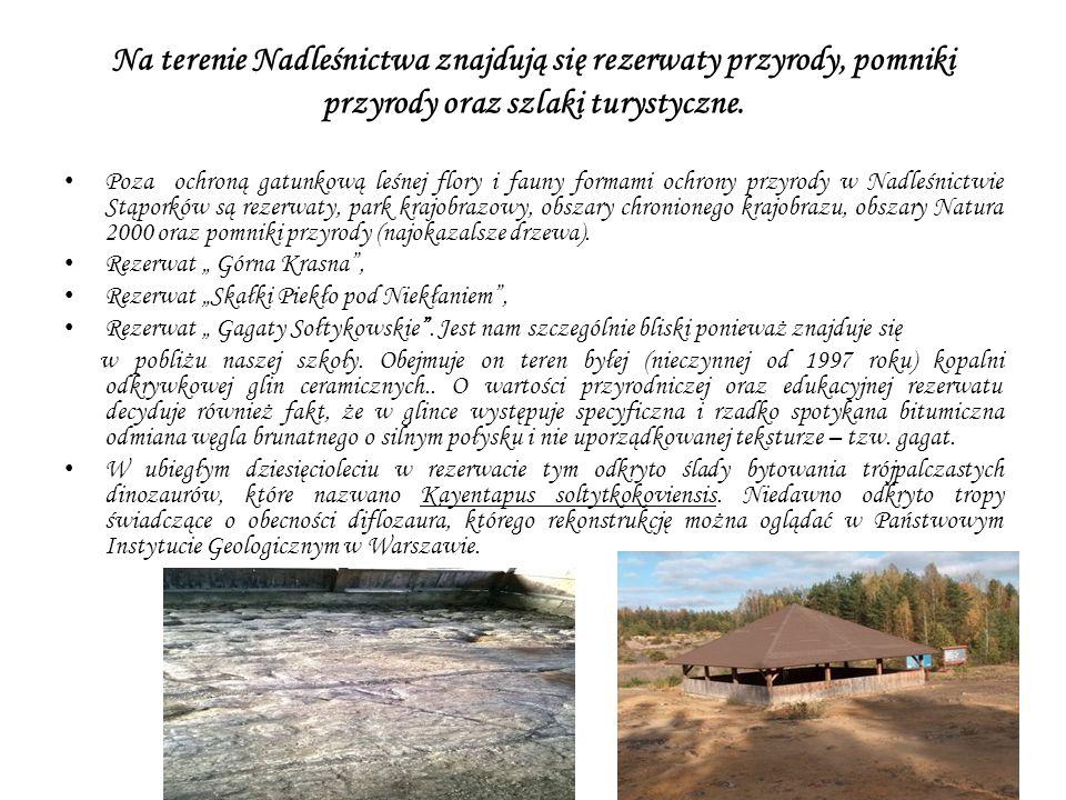 Na terenie Nadleśnictwa znajdują się rezerwaty przyrody, pomniki przyrody oraz szlaki turystyczne.