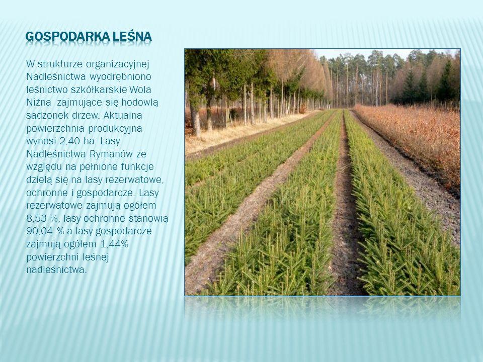 W strukturze organizacyjnej Nadleśnictwa wyodrębniono leśnictwo szkółkarskie Wola Niżna zajmujące się hodowlą sadzonek drzew. Aktualna powierzchnia pr