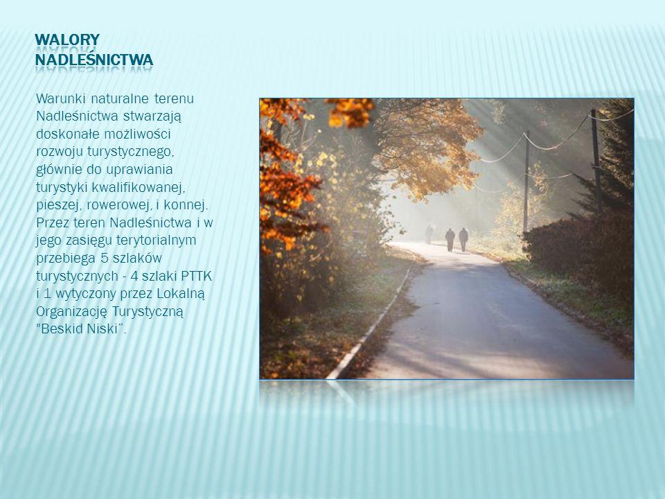 Warunki naturalne terenu Nadleśnictwa stwarzają doskonałe możliwości rozwoju turystycznego, głównie do uprawiania turystyki kwalifikowanej, pieszej, r