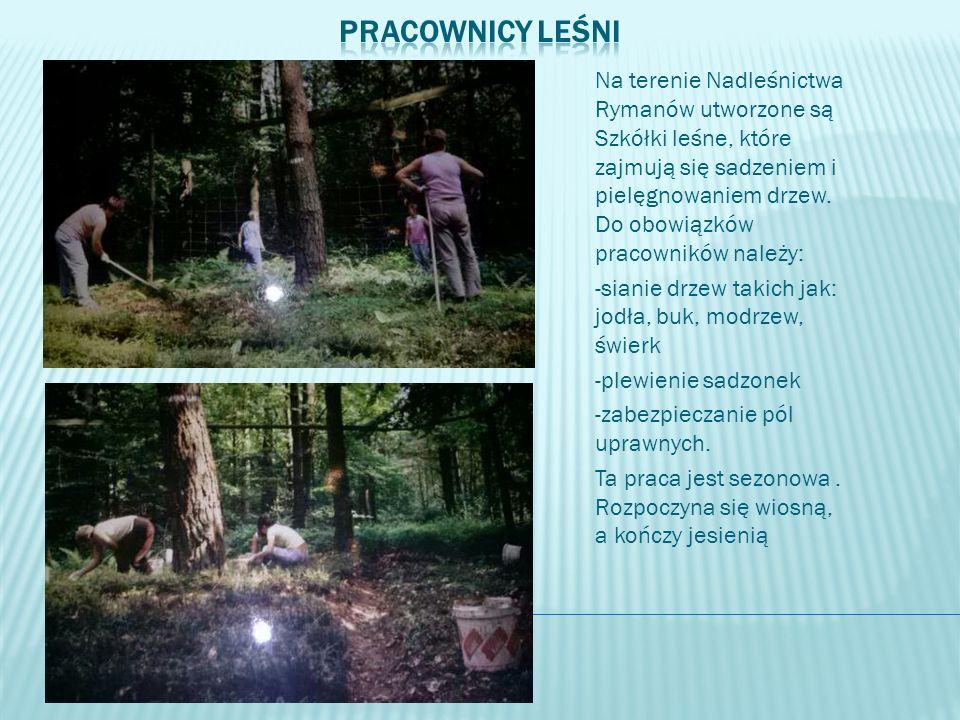 Na terenie Nadleśnictwa Rymanów utworzone są Szkółki leśne, które zajmują się sadzeniem i pielęgnowaniem drzew. Do obowiązków pracowników należy: -sia
