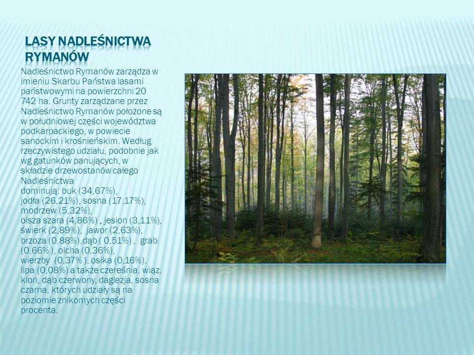 Nadleśnictwo Rymanów zarządza w imieniu Skarbu Państwa lasami państwowymi na powierzchni 20 742 ha. Grunty zarządzane przez Nadleśnictwo Rymanów położ