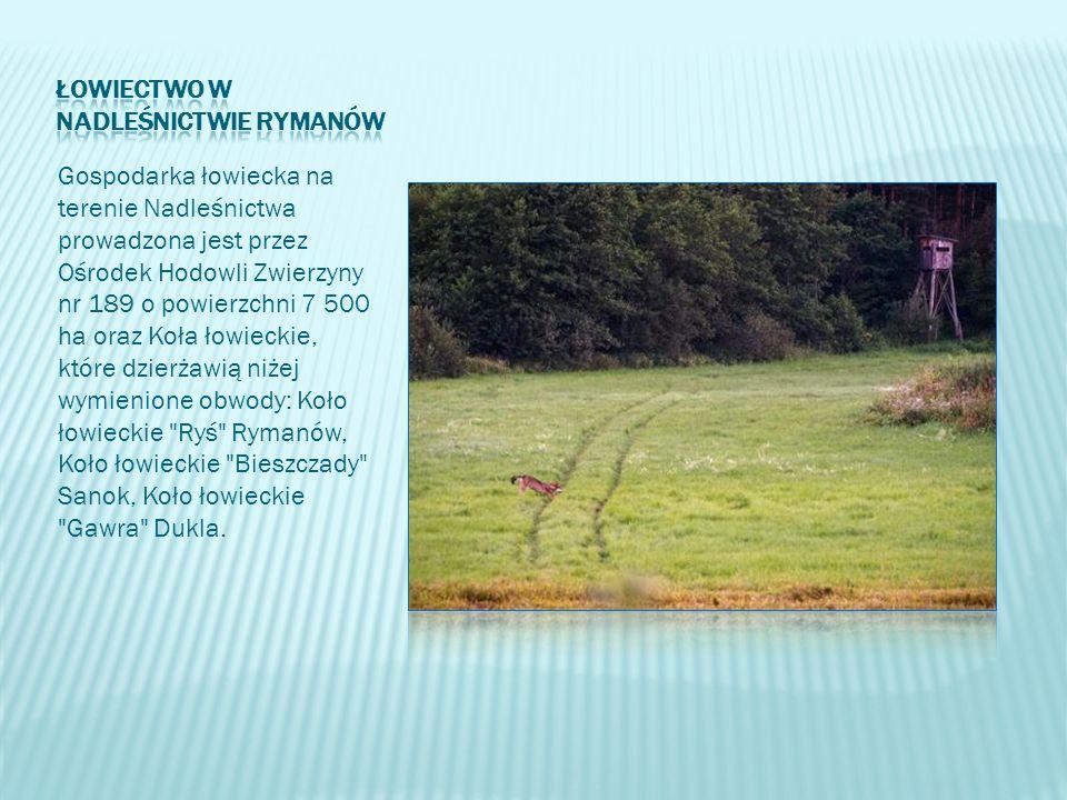 Gospodarka łowiecka na terenie Nadleśnictwa prowadzona jest przez Ośrodek Hodowli Zwierzyny nr 189 o powierzchni 7 500 ha oraz Koła łowieckie, które d