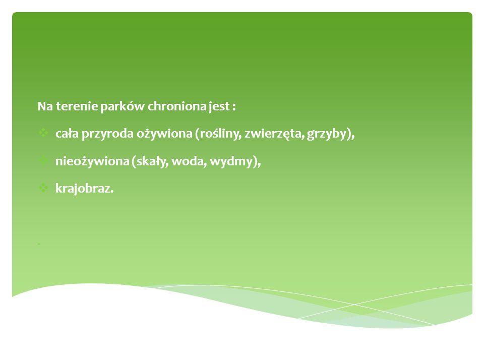 Na terenie parków chroniona jest :  cała przyroda ożywiona (rośliny, zwierzęta, grzyby),  nieożywiona (skały, woda, wydmy),  krajobraz. -