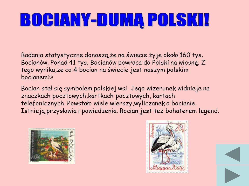 Badania statystyczne donoszą,że na świecie żyje około 160 tys. Bocianów. Ponad 41 tys. Bocianów powraca do Polski na wiosnę. Z tego wynika,że co 4 boc