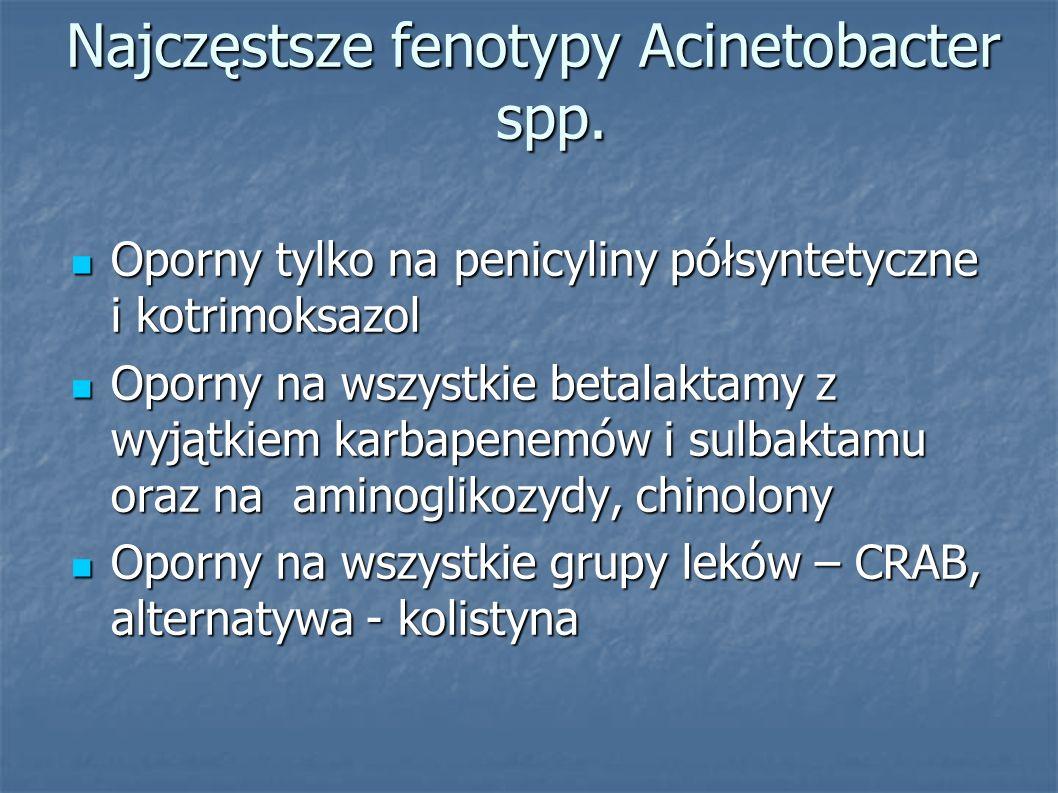 Najczęstsze fenotypy Acinetobacter spp. Oporny tylko na penicyliny półsyntetyczne i kotrimoksazol Oporny tylko na penicyliny półsyntetyczne i kotrimok