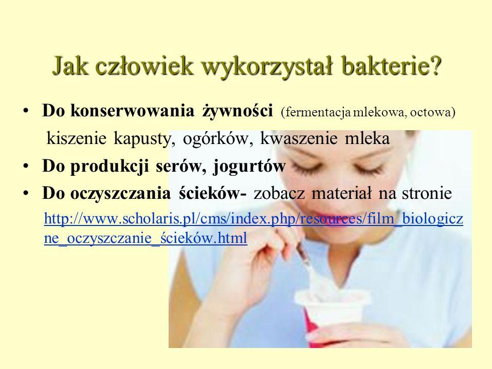 Jak człowiek wykorzystał bakterie? Do konserwowania żywności (fermentacja mlekowa, octowa) kiszenie kapusty, ogórków, kwaszenie mleka Do produkcji ser
