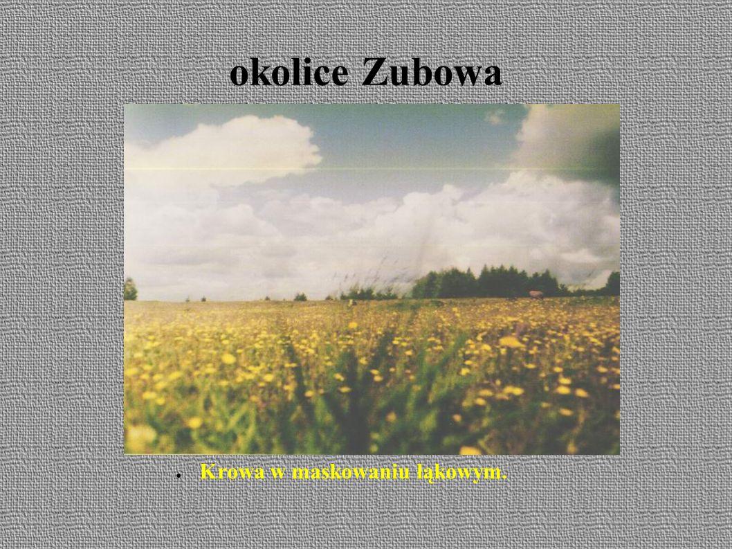 3 dzień 13.06. Zubowo – Sobótka – Biała – Bielsk Podlaski (około 12 km.)