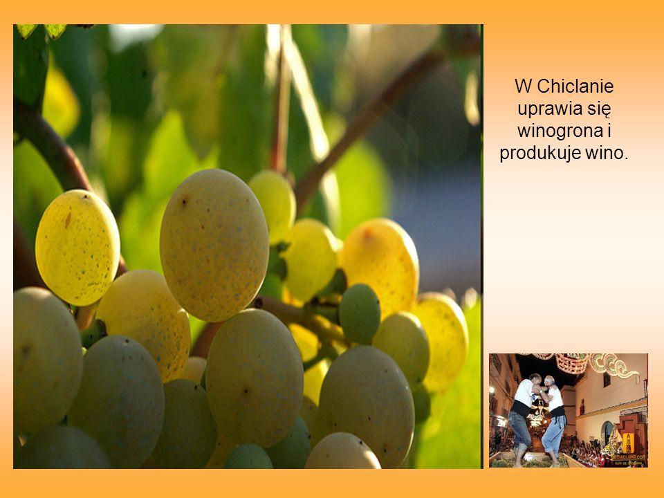 W Chiclanie uprawia się winogrona i produkuje wino.