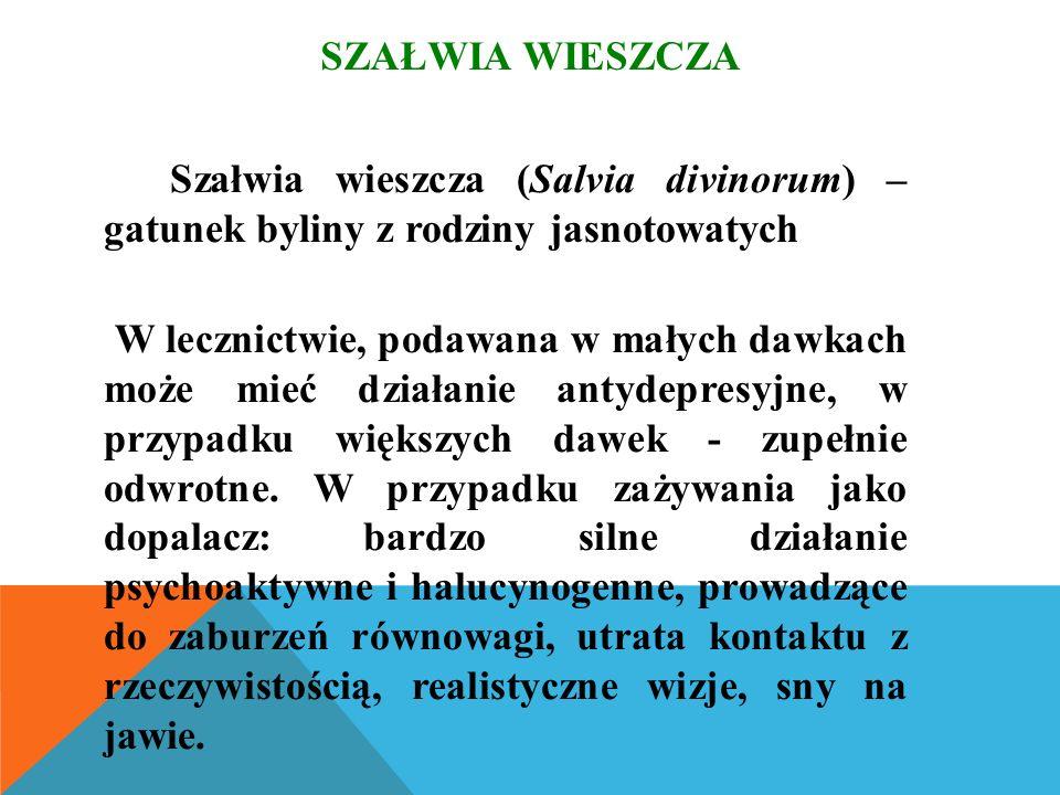 SZAŁWIA WIESZCZA Szałwia wieszcza (Salvia divinorum) – gatunek byliny z rodziny jasnotowatych W lecznictwie, podawana w małych dawkach może mieć działanie antydepresyjne, w przypadku większych dawek - zupełnie odwrotne.