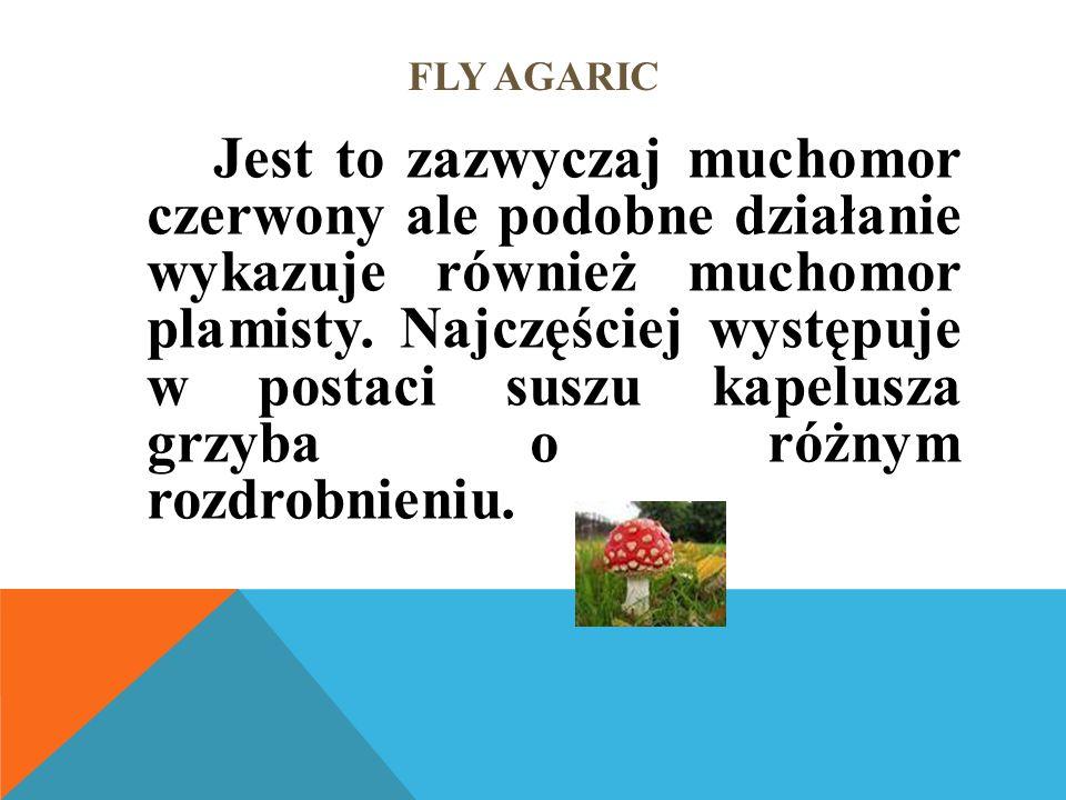 FLY AGARIC Jest to zazwyczaj muchomor czerwony ale podobne działanie wykazuje również muchomor plamisty.