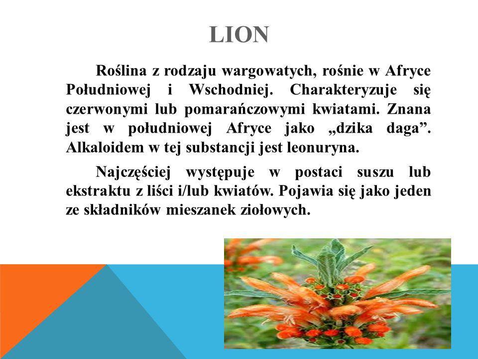LION Roślina z rodzaju wargowatych, rośnie w Afryce Południowej i Wschodniej.