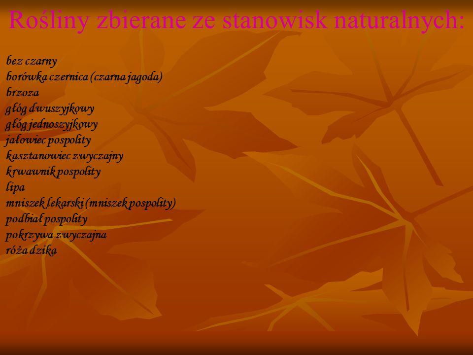 Rośliny zbierane ze stanowisk naturalnych: bez czarny borówka czernica (czarna jagoda) brzoza głóg dwuszyjkowy głóg jednoszyjkowy jałowiec pospolity kasztanowiec zwyczajny krwawnik pospolity lipa mniszek lekarski (mniszek pospolity) podbiał pospolity pokrzywa zwyczajna róża dzika