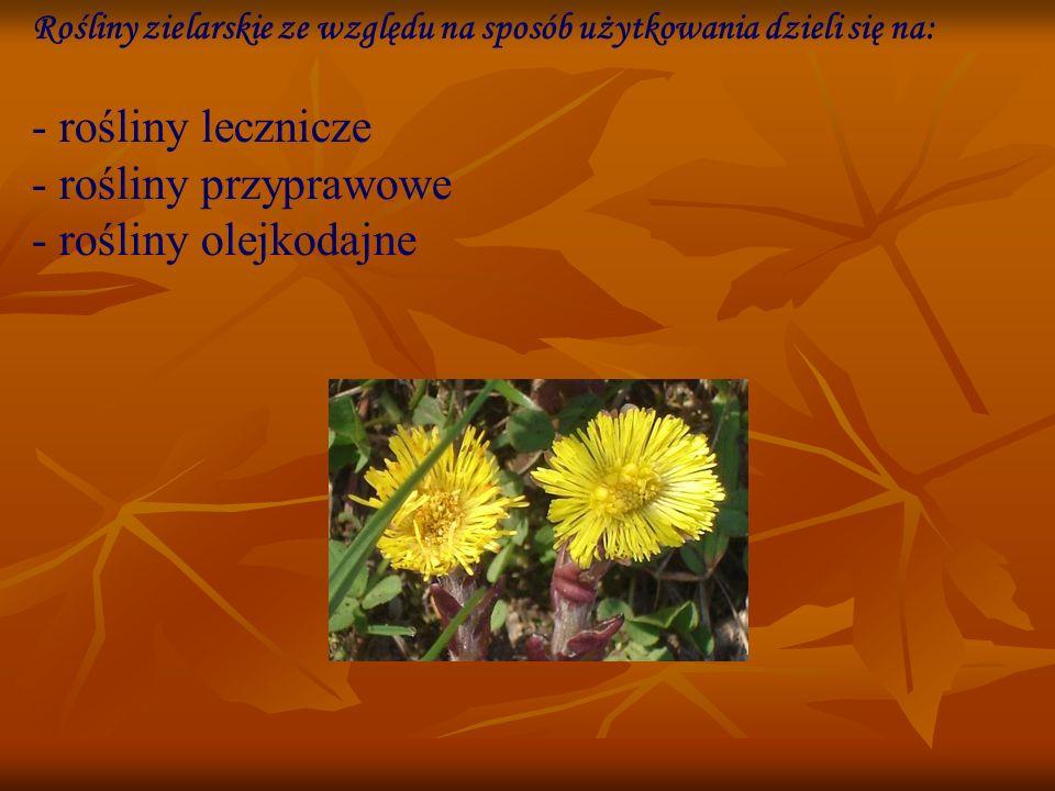 Zioła lecznicze: Rośliny lecznicze - najczęściej rośliny lądowe, zawierające substancje czynne, stosowane w medycynie i ziołolecznictwie.