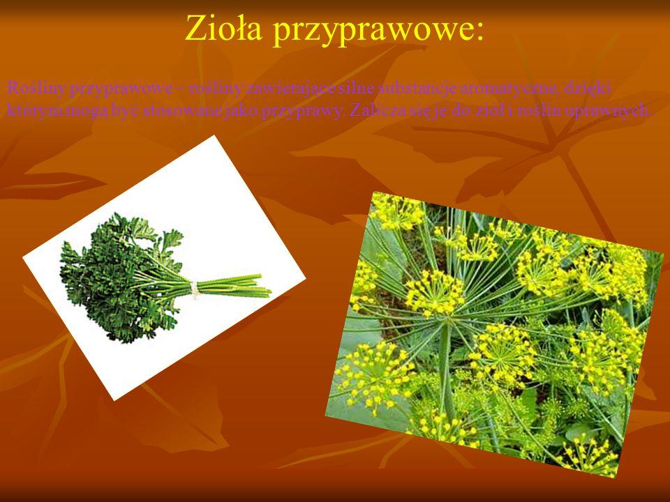Zioła przyprawowe: Rośliny przyprawowe – rośliny zawierające silne substancje aromatyczne, dzięki którym mogą być stosowane jako przyprawy.