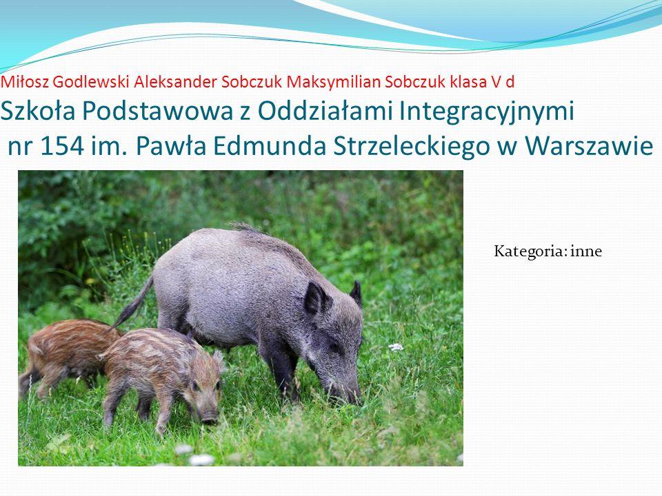 Miłosz Godlewski Aleksander Sobczuk Maksymilian Sobczuk klasa V d Szkoła Podstawowa z Oddziałami Integracyjnymi nr 154 im.