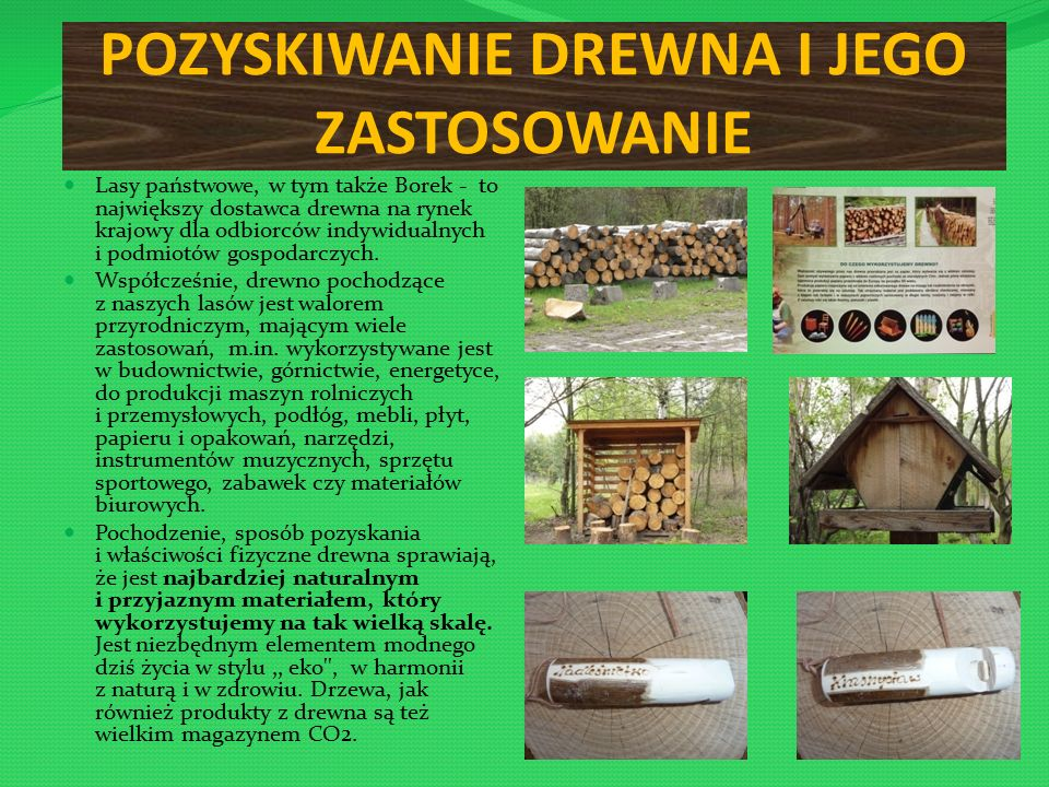 POZYSKIWANIE DREWNA I JEGO ZASTOSOWANIE Lasy państwowe, w tym także Borek - to największy dostawca drewna na rynek krajowy dla odbiorców indywidualnych i podmiotów gospodarczych.
