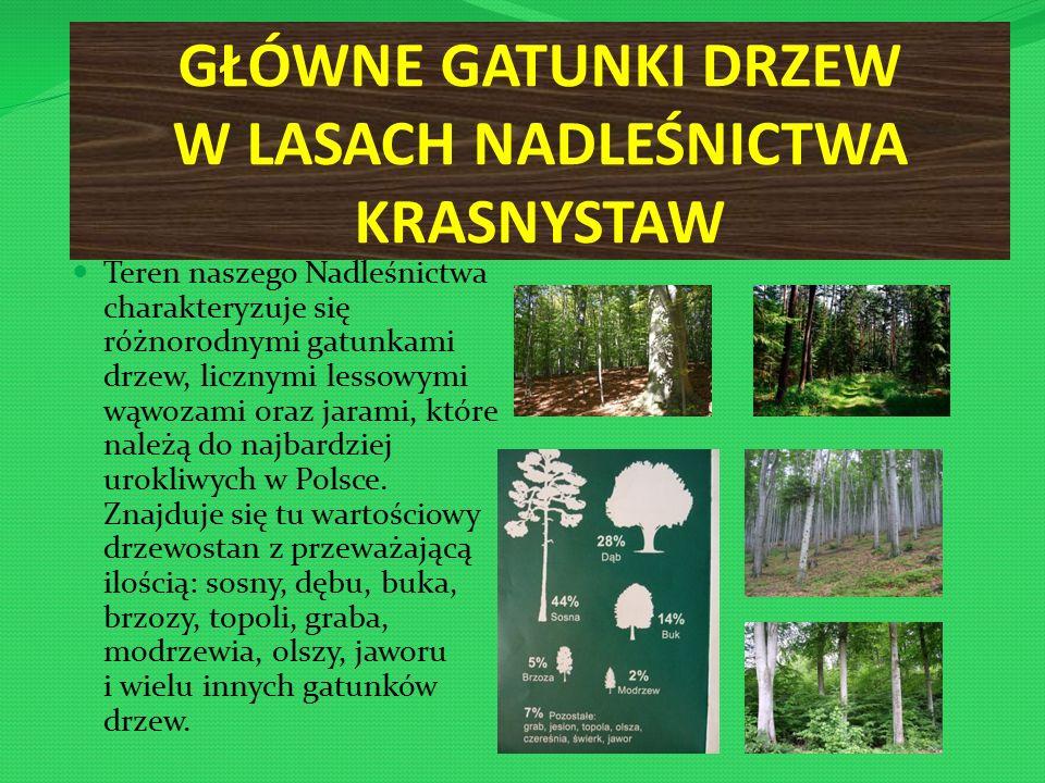 GŁÓWNE GATUNKI DRZEW W LASACH NADLEŚNICTWA KRASNYSTAW Teren naszego Nadleśnictwa charakteryzuje się różnorodnymi gatunkami drzew, licznymi lessowymi wąwozami oraz jarami, które należą do najbardziej urokliwych w Polsce.