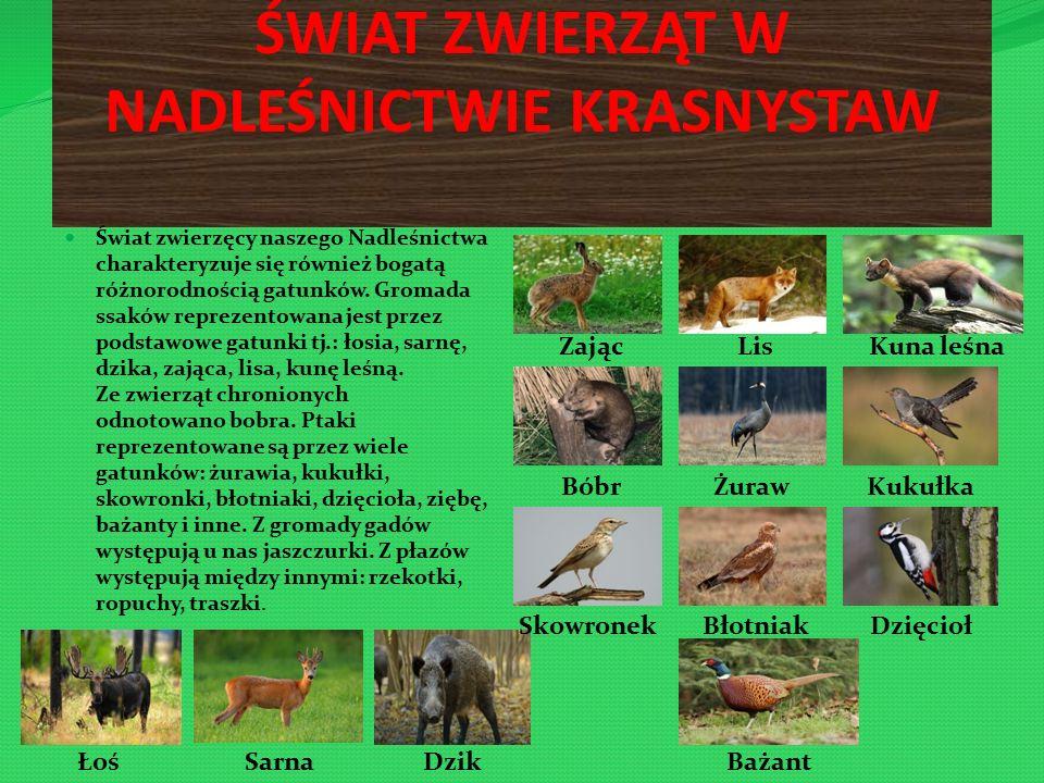 ŚWIAT ZWIERZĄT W NADLEŚNICTWIE KRASNYSTAW Świat zwierzęcy naszego Nadleśnictwa charakteryzuje się również bogatą różnorodnością gatunków.
