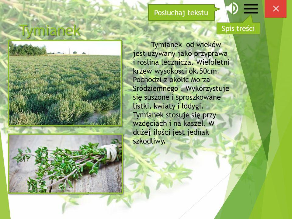 Tymianek Tymianek od wieków jest używany jako przyprawa i roślina lecznicza.