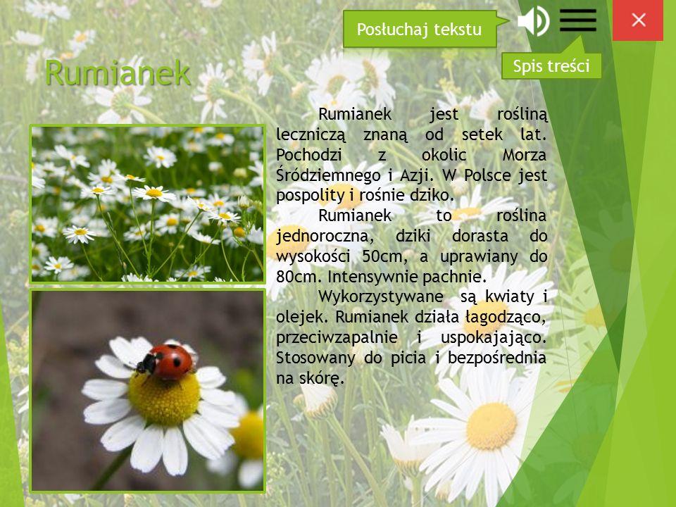 Rumianek Rumianek jest rośliną leczniczą znaną od setek lat.