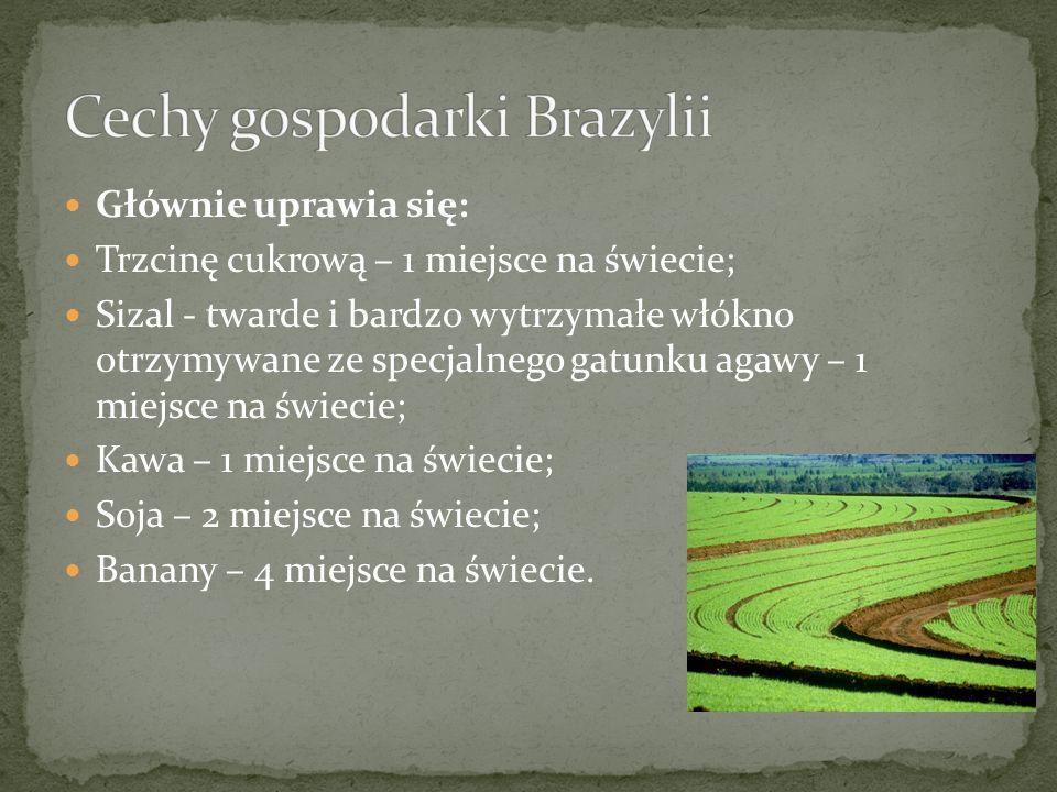 Głównie uprawia się: Trzcinę cukrową – 1 miejsce na świecie; Sizal - twarde i bardzo wytrzymałe włókno otrzymywane ze specjalnego gatunku agawy – 1 mi