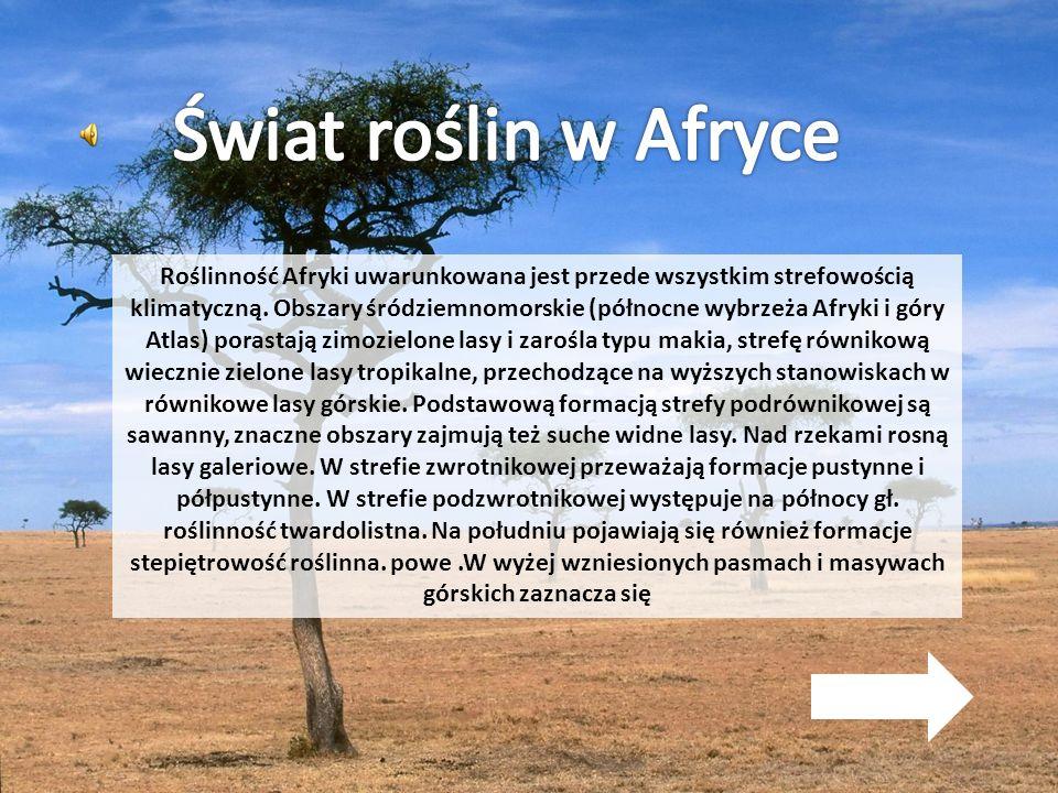 Roślinność Afryki uwarunkowana jest przede wszystkim strefowością klimatyczną. Obszary śródziemnomorskie (północne wybrzeża Afryki i góry Atlas) poras