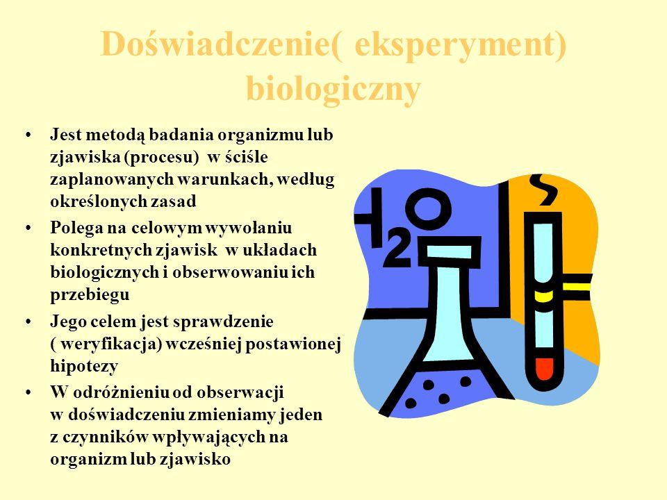 Doświadczenie( eksperyment) biologiczny Jest metodą badania organizmu lub zjawiska (procesu) w ściśle zaplanowanych warunkach, według określonych zasad Polega na celowym wywołaniu konkretnych zjawisk w układach biologicznych i obserwowaniu ich przebiegu Jego celem jest sprawdzenie ( weryfikacja) wcześniej postawionej hipotezy W odróżnieniu od obserwacji w doświadczeniu zmieniamy jeden z czynników wpływających na organizm lub zjawisko