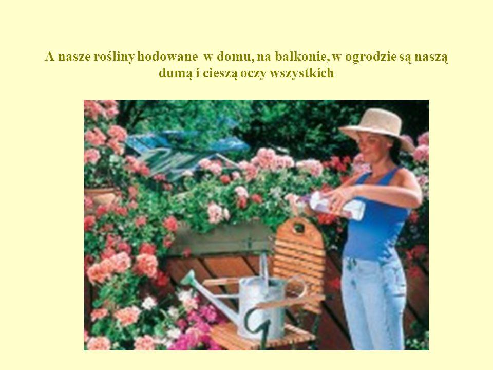 A nasze rośliny hodowane w domu, na balkonie, w ogrodzie są naszą dumą i cieszą oczy wszystkich
