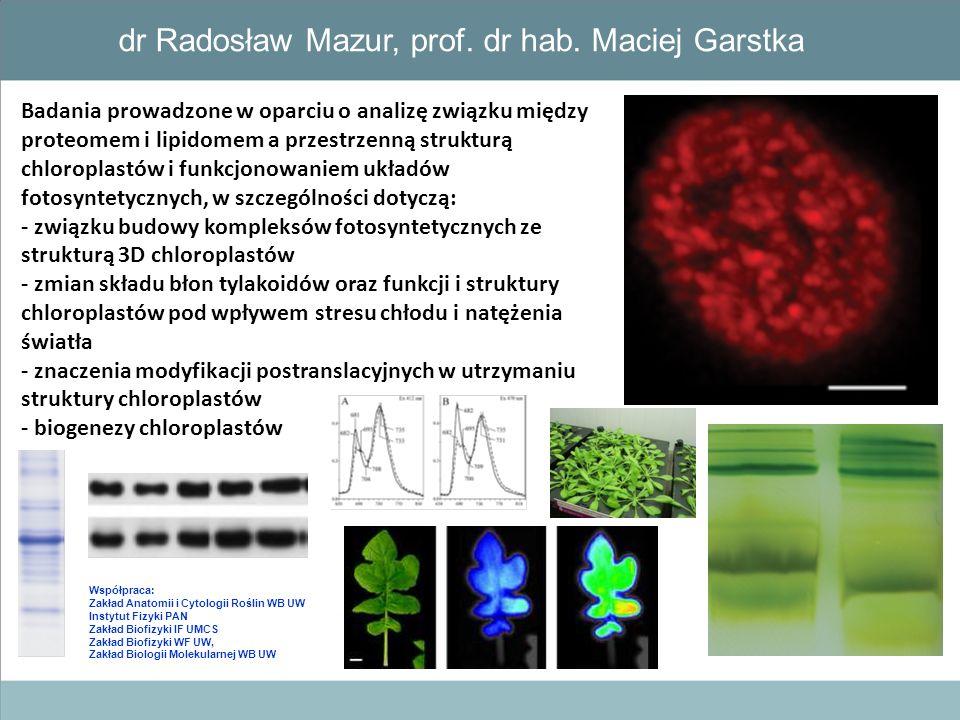 Badania prowadzone w oparciu o analizę związku między proteomem i lipidomem a przestrzenną strukturą chloroplastów i funkcjonowaniem układów fotosynte