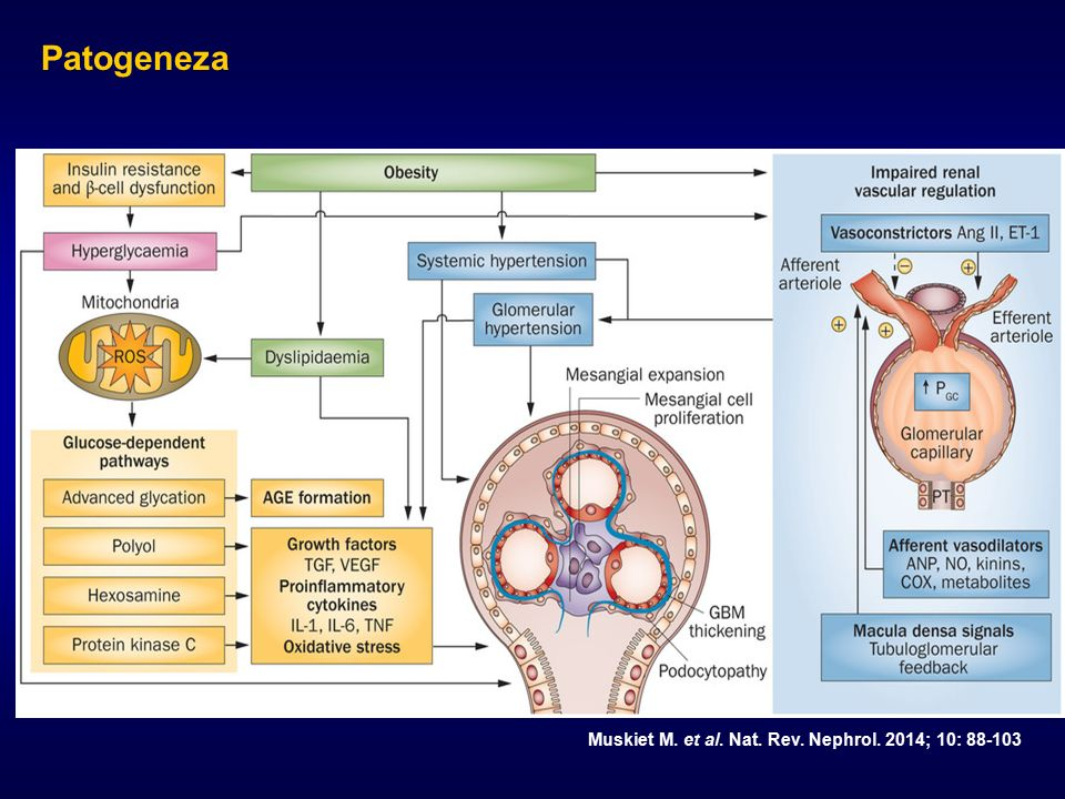 Patogeneza Muskiet M. et al. Nat. Rev. Nephrol. 2014; 10: 88-103 / AGE