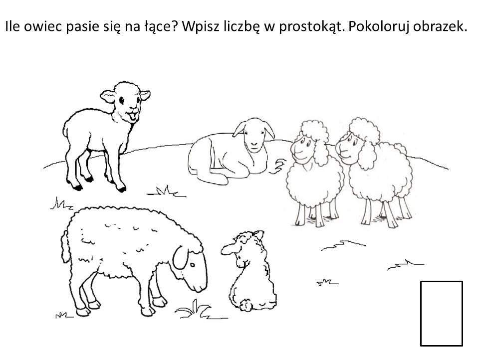 Ile owiec pasie się na łące? Wpisz liczbę w prostokąt. Pokoloruj obrazek.