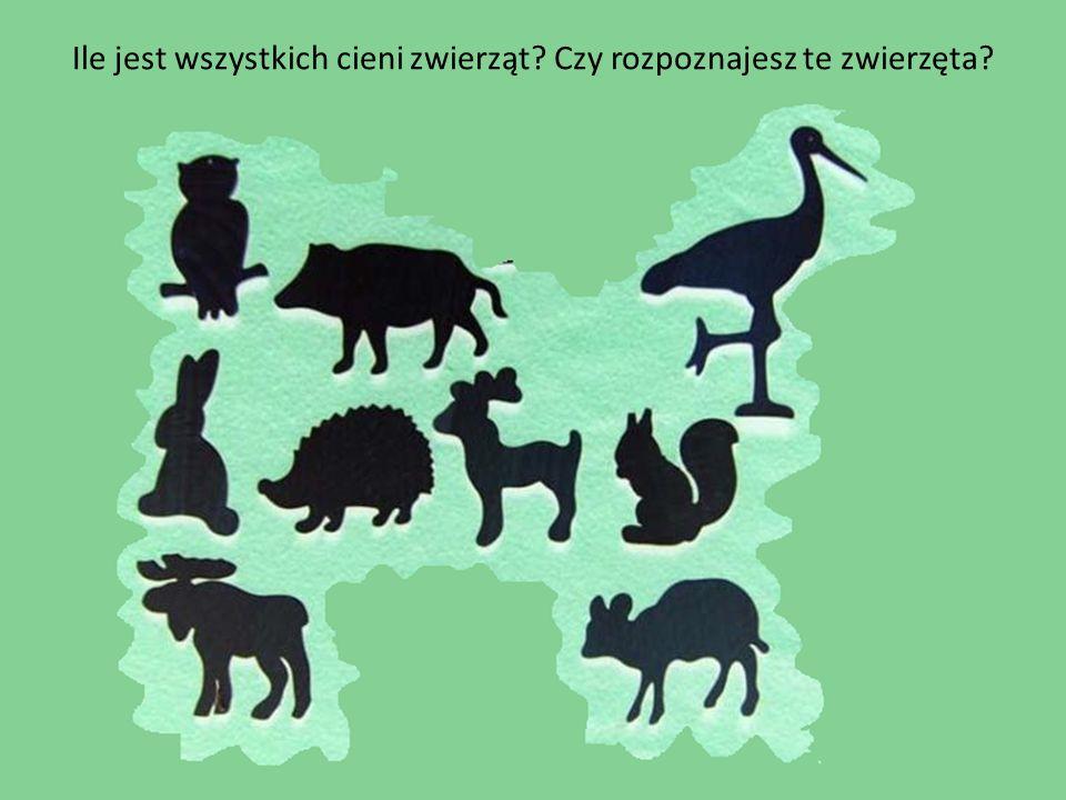 Ile jest wszystkich cieni zwierząt? Czy rozpoznajesz te zwierzęta?