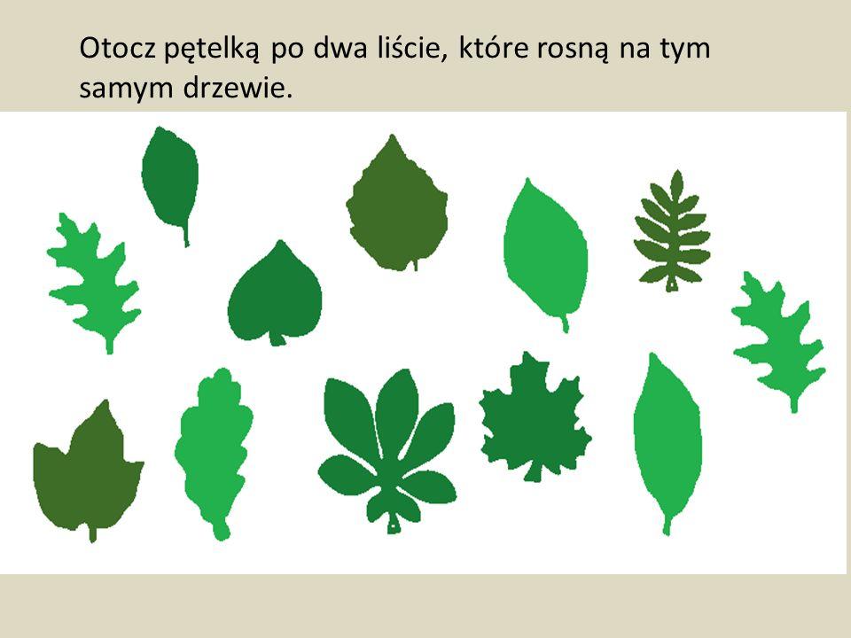 Otocz pętelką po dwa liście, które rosną na tym samym drzewie.