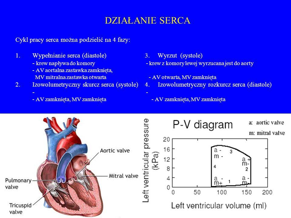 DZIAŁANIE SERCA Cykl pracy serca można podzielić na 4 fazy: 1.Wypełnianie serca (diastole) 3. Wyrzut (systole) - krew napływa do komory - krew z komor
